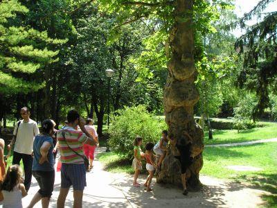 drvo zelja