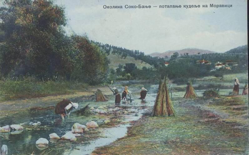 Uzgajanje konoplje u Sokobanji